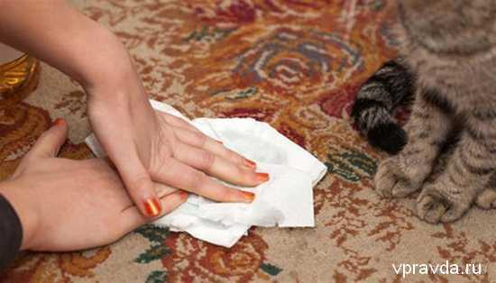 Как убрать кошачий запах мочи в домашних условиях